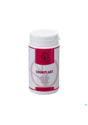 Cogniplant Comp 1003361292-20